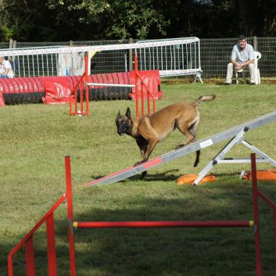 CONCOURS NATIONAL AGILITY 25 AOUT 2019