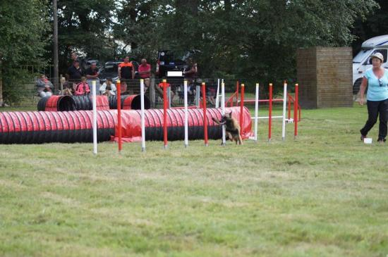 CONCOURS AGILITY 2016